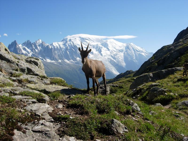 http://www.travelsys.sk/public/users/paxtour/images/fotogaleria_hotel/l_okolo_mont_blanc_01.jpg